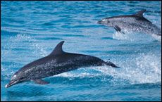 Results showed the group who had swum with the dolphins had improved significantly.