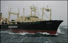 The 8000-ton whaling ship Nisshin Maru on a collision course with the 657-ton conservation ship Farley Mowat on Christmas Day. Picture / Sea Shepherd