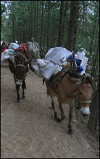 Mule train in Yunnan