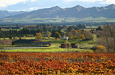 Waipara's Muddy Water Winery is an eager participant in a Lincoln University biodiversity project.
