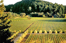 The Napa Valley is a wine-lover's paradise.