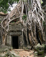 Ta Prohm, entangled in trees and vines, has an eerie aura. Photo / Jim Eagles