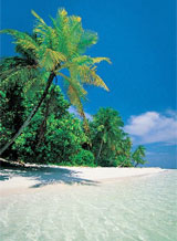 Palm trees, white sand, clear blue sea. Anything else required? Photo / Supplied