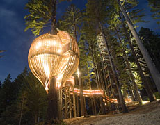 The tree house restaurant sits ten metres above the ground in a redwood tree. Photo / Mike Reihana