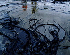 Amnesty International claims Shell has been covering up oil spills caused by its own equipment and blaming them on sabotage.