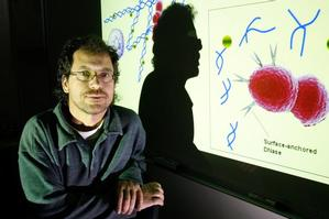 Dr Thomas Proft is spearheading research to try to combat the spread of streptococcus. Photo / Brett Phibbs