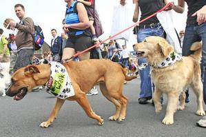 Dogs and their owners set off for a 3km walk at the Wag 'n' Walk gathering of dogs at Milford Reserve on Saturday. Photo / Martin Sykes