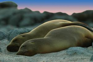 Sea lions, usually a very curious lot, take a break. Photo / Supplied