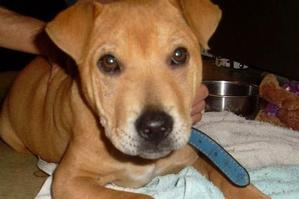 """Kaos was put down after a worker deleted the """"hold"""" flag on her records at the Manukau animal shelter."""