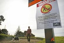 The warning signs will not be removed until investigating agencies believe Auckland's beaches are safe. Photo / Greg Bowker