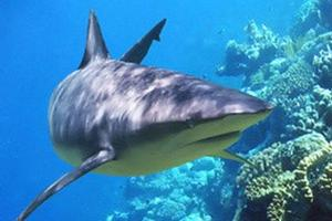 A step has been made to protect endangered species of shark.
