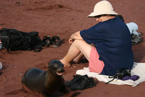 A sea lion confidently sidles up to a visitor. Photo / Jim Eagles