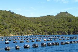 The Government wants to relax the restrictions on marine farming and create a $1 billion industry by 2025.