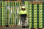 The 2025 Taskforce says Zespri's monopolistic position prevents the development of a more competitive market. Photo / Alan Gibson
