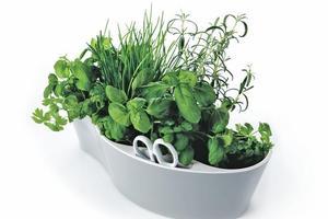 Herb Garden from Simon James Design. Photo / Supplied