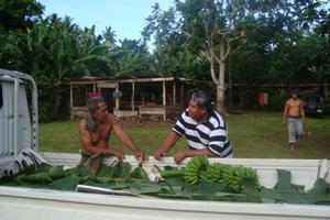 Petelo Falesii, an organic farmer from Faleula village in Upolu and am WIBDI staffer on a collection day.