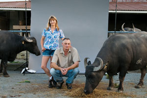 Helen and Richard Dorresteyn with some of their prized water buffalo. Photo / Ken Dowie