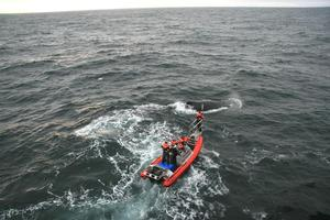 Scientists from 13 countries took part in the tagging of humpback whales in Antarctica. Photo / Supplied