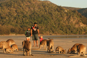 There is much Australian wildlife to see on the beach at Cape Hillsborough. Photo / Jim Eagles