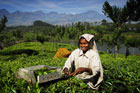 A tea cutter in the Indian state of Kerala. Photo / Singapore Airlines