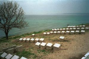 NZ and Australian graves above Anzac Cove. Photo / Hawke's Bay Today
