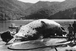 A Great Barrier Island whaling station in 1956. Many New Zealanders are against whaling these days.