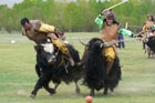 It may be put on solely for tourists, but a yak polo match in Mongolia is a heap of fun. Photo / Jim Eagles
