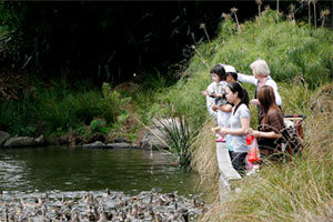 Feeding the ducks is always a popular pastime at the Botanic Gardens. Photo / Greg Bowker