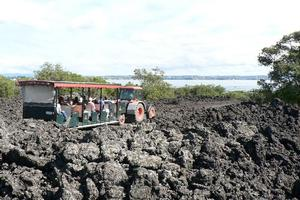 Visitors to Rangitoto can pay a little extra and travel around the island and up to near the summit on a tractor-drawn trailer. Photo / Jim Eagles
