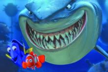 Finding Nemo and the not-so-scary sharks. Photo / Supplied
