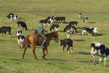 NZ Farming Systems was set up to develop dairy-farm operations in Uruguay. Photo / Supplied