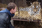 The tigers at the sanctuary were separated from visitors by nothing more than flimsy wire netting. Photo / Rob Gray