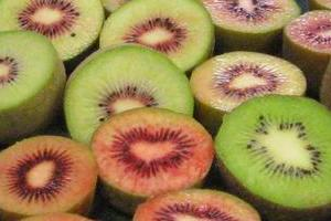 Zespri is to start orchard trials for new red kiwifruit. Photo / Bay of Plenty Times