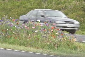 The wildflowers struggled alongside the motorway and succumbed to weeds. Photo / Paul Estcourt