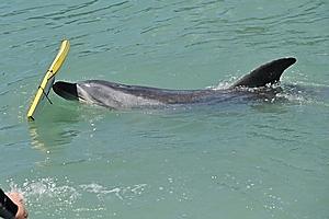 Moko in the Turanganui River. Photo / Gisborne Herald