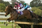 Spirit of Alaton has a sound record over hurdles and is a place hope at Trentham tomorrow. Photo / Paul Estcourt