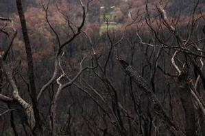 The aftermath of a bush fire in Kinglake, Victoria last year. File photo / Supplied