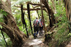 The Hillary Trail should give the Waitakeres new appeal for walkers. Photo / Supplied