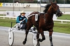 Harley Earl is on trial for a start in the Chariots of Fire at Menangle tonight. Photo / Christine Cornege