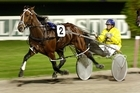 Former topline pacer Auckland Reactor might have run his last race. Photo / Brett Phibbs