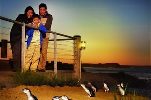 A trip to Phillip Island to see the little penguins come ashore is a treat for both children and their parents. Photo / Visions of Victoria