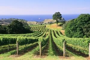 The Spencers' Man O'War vineyard. Photo / Supplied