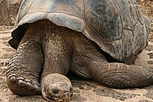 The Galapagos islands are famous for being home to giant tortoises and a host of other unique wildife. Photo / Jim Eagles