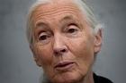 Dr Jane Goodall. Photo / Mark Mitchell