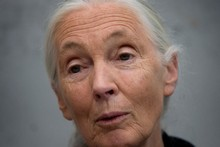 Dr Jane Goodall. Photo / Mark Mitchell