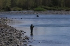 A trout fisher on the Tongariro River. Recent rain has improved fishing on the river. Photo / NZ HERALD.