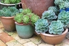 Pots look best en masse - the bigger the better. Photo / Supplied