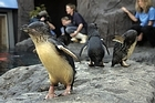 Penguins at the International Antarctic Centre in Christchurch. Photo / Simon Baker