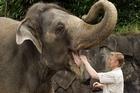Burma at Auckland Zoo. Photo / Herald on Sunday