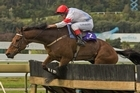 Counter Punch will be seeking to add the Grand National title to his Koral win. Photo / Paul Estcourt